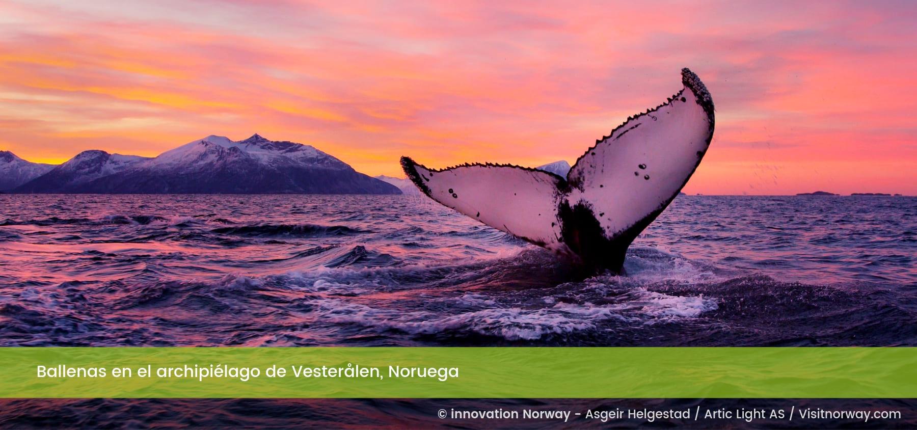 Ballenas en el archipiélago de Vesteralen, Noruega