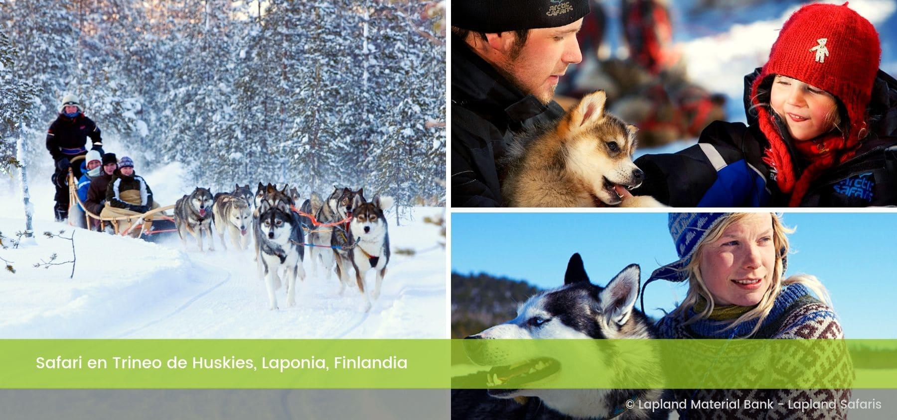 Safari Trineo de Perros Huskies Rovaniemi Laponia Finlandia