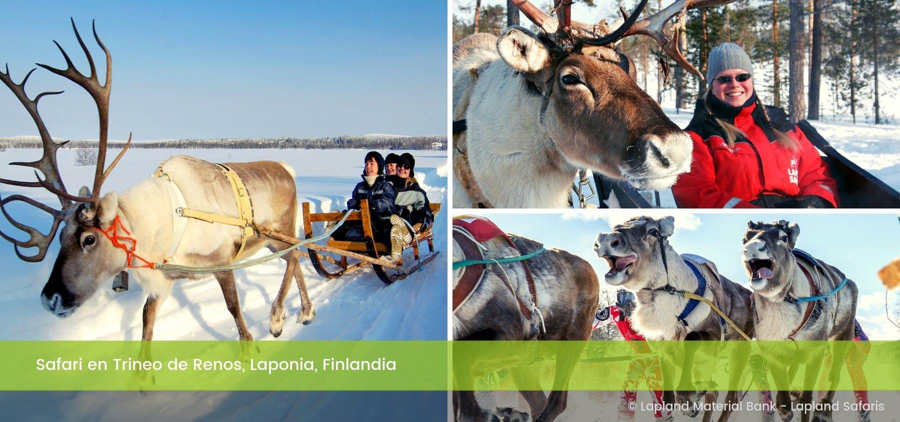 Safari Trineo de Renos Rovaniemi Laponia Finlandia